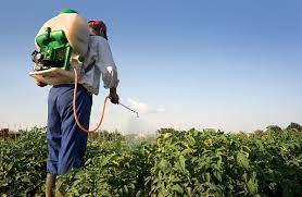 Pesquisa mostra que a rejeição aos agrotóxicos ganhou a consciência da população