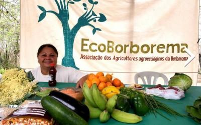 Em meio a seca histórica, agroecologia gera renda para sertanejos do NE