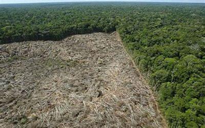 Governo avança na financeirização da Natureza