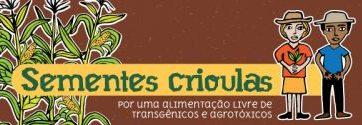 Sementes Crioulas: por uma alimentação livre de transgênicos e agrotóxicos