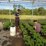 Pesquisadores identificam efeitos indesejados de agrotóxicos à base de glifosato em plantas transgênicas